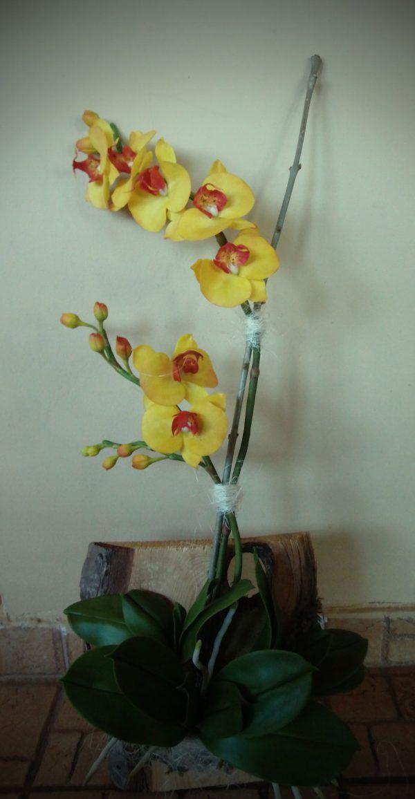 Phalaenopsis clay