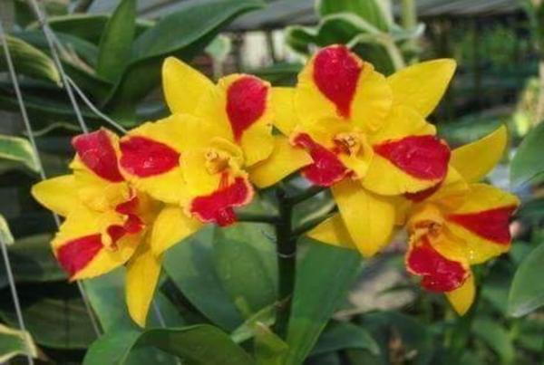 Orchid online sale
